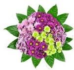 feestelijke bloemen - chrysant gemengd