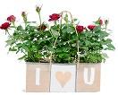 online planten bestellen - i love you roosjes