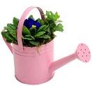 online planten bestellen - voorjaarsgieter