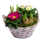 online planten bestellen - voorjaarsmandje